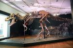 Тираннозавр Стэн продан за рекордную сумму в 31,8 миллиона долларов