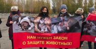 Митинг в защиту животных в Нур-Султане
