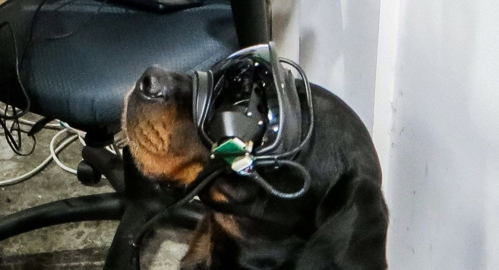 Американская компания разработала AR-очки для собак