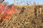 Камыш горел на побережье Каспия