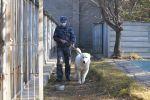Тобетов дрессируют в полиции Нур-Султана