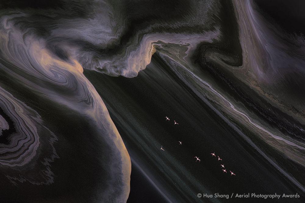 Кениялық Натрон мен Мекка көлдерінің тұзды толқындарының үстінде ұшып бара жатқан қоқиқаздар. Nature аталымы бойынша байқауға ұсынылған бұл суретті қытай фотографы Hua Shang тікұшақтан түсірген.