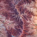 Бельгиялық фотограф Johan Vandenhecke түсірген қызыл Татакоа шөліндегі тау жыныстарының түзілімдері Abstract аталымында әділқазылардың ықыласына бөленді.