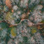 Қойлар ормандағы жерге түскен қызыл жапырақ үстімен жайылымнан қайтып келеді. Түрік фотографы Mehmet Aslan  Forest Path деп аталатын суретімен Trees & forests номинациясында жеңіске жетті.