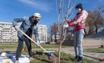Журналисты Sputnik Казахстан приняли участие в посадке Аллеи журналистов в Алматы
