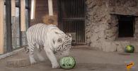 Шуточное голосование: животные предсказали исход выборов в США - видео