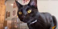 10$ за час с черными кошками: котокафе в Японии - видео