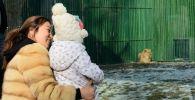 Актауский львенок Симба осваивает новый дом в зоопарке Алматы