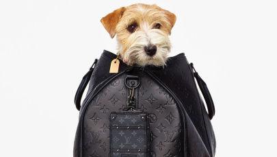 Самые модные собачки, по версии Prada, Louis Vuitton, Gucci и Valentino