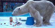 В зоопарке Алматы попрощались с белым медведем Алькором