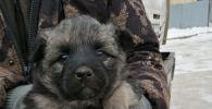 Один из спасенных щенков