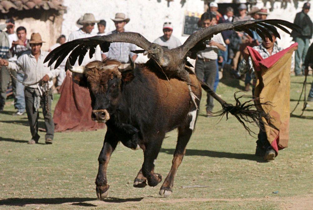 Yawar Fiesta фестивалінің атауы көне кечуа тілінде қан фестивалі