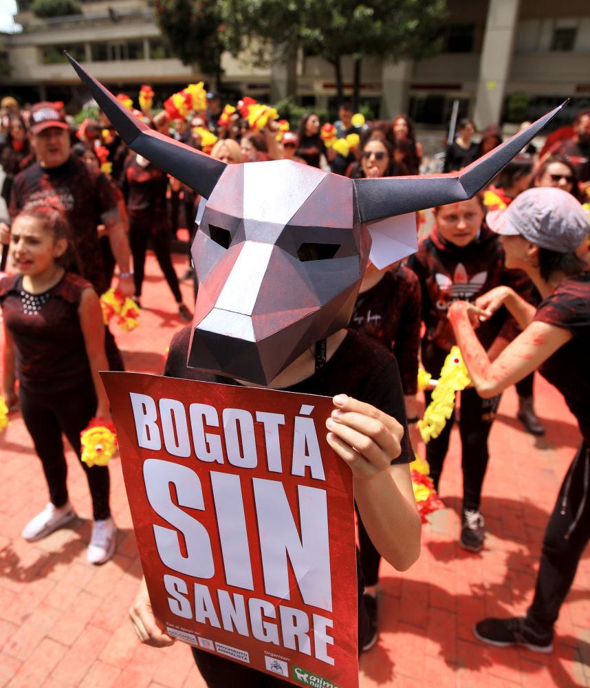 Богота коррида маусымына қарсы наразылық акциясына қатысушы