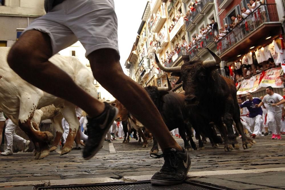 Сан-Фермин фестивалінде бұқалармен жағаласып жүгіру.