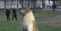 Как пес Жорик стал символом всех бездомных животных - видео