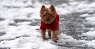 Собачка в свитере гуляет по снегу