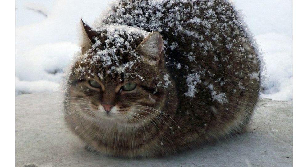 Кот на морозе