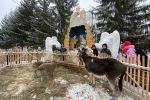 Рождественский вертеп с живыми животными установили в храме Петропавловска