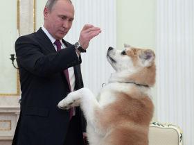 Владимир Путин с собакой Юмэ породы акита-ину