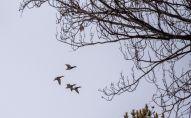 В зоопарке Алматы перелетным птицам помогают перезимовать