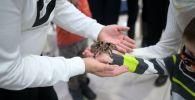 Выставка пауков открылась в Нур-Султане
