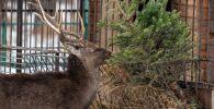 Акция по сбору живых новогодних елок для зоопарка Алматы