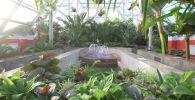 Ботанический сад в Нур-Султане: как попасть в тропики, не выезжая из страны - видео