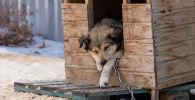 Спасенная от живодеров собака в реабилитационном центре приюта Белый Бим