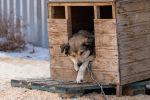 Школьницы из Алматинской области строят домики для бездомных собак из приютов - видео