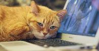 Кот у ноутбука