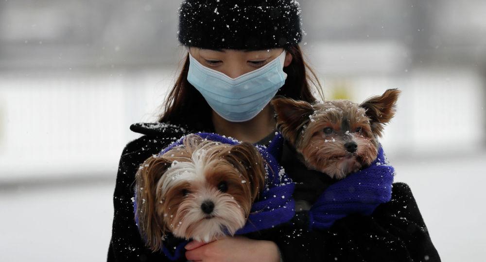 Девушка в маске с собачками под снегом