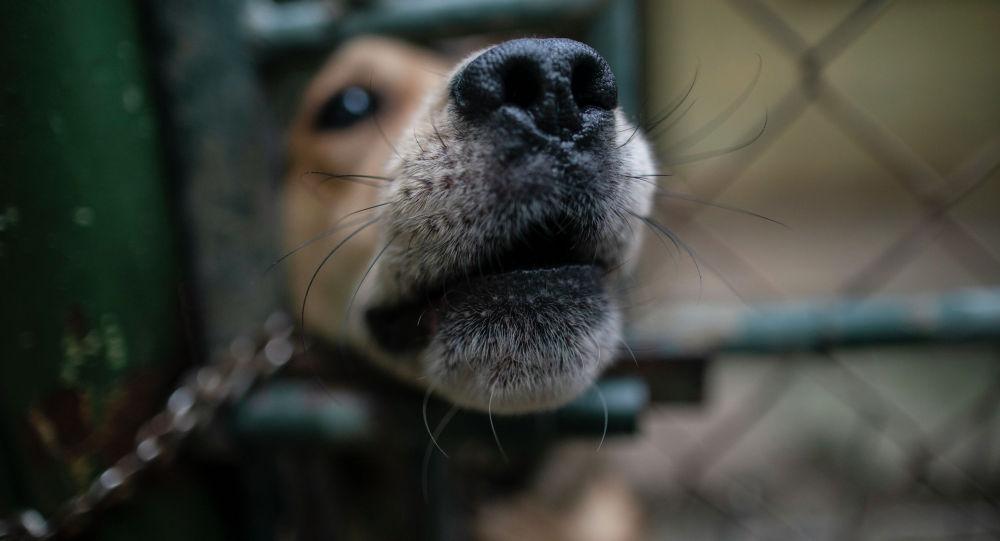 Собака выглядывает сквозь отверстие в ограде