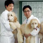 Сеул ұлттық университетінің профессоры Ли Бен-чунь 2005 жылы туған әлемдегі алғашқы клондалған иттерді көрсетіп жатыр