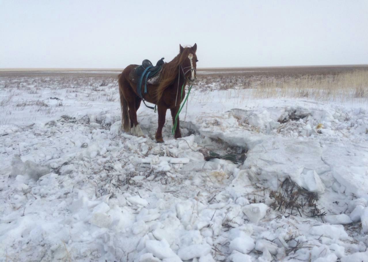 Лошадь, которая была с пастухом