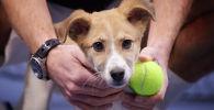 Теннисисты встретились с собаками на корте Национального теннисного центра, чтобы поддержать работу волонтеров и городских приютов
