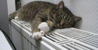 Кот на решетке радиатора отопления, иллюстративное фото