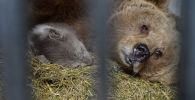 Медвежонка, родившегося в первый день 2021 года, показали в Алматинском зоопарке