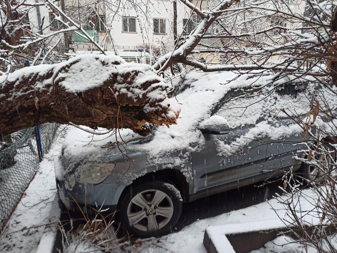 Деревья упали на автомобили из-за обильных осадков в Алматы