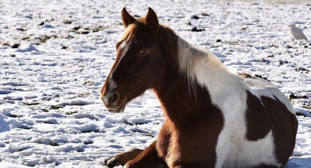 Лошадь на снегу, иллюстративное фото