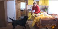 Собака помогает хозяину в домашних делах - видео