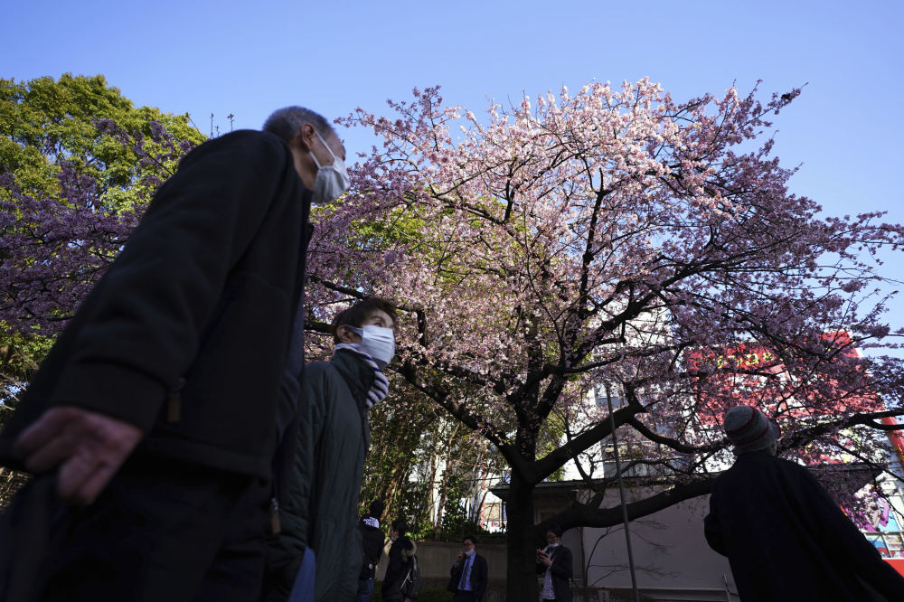 Сакура гүлдеген уақытта жапон саябақтары алқызыл ағаштарды тамашалауға келген жергілікті тұрғындар мен туристерге толады.