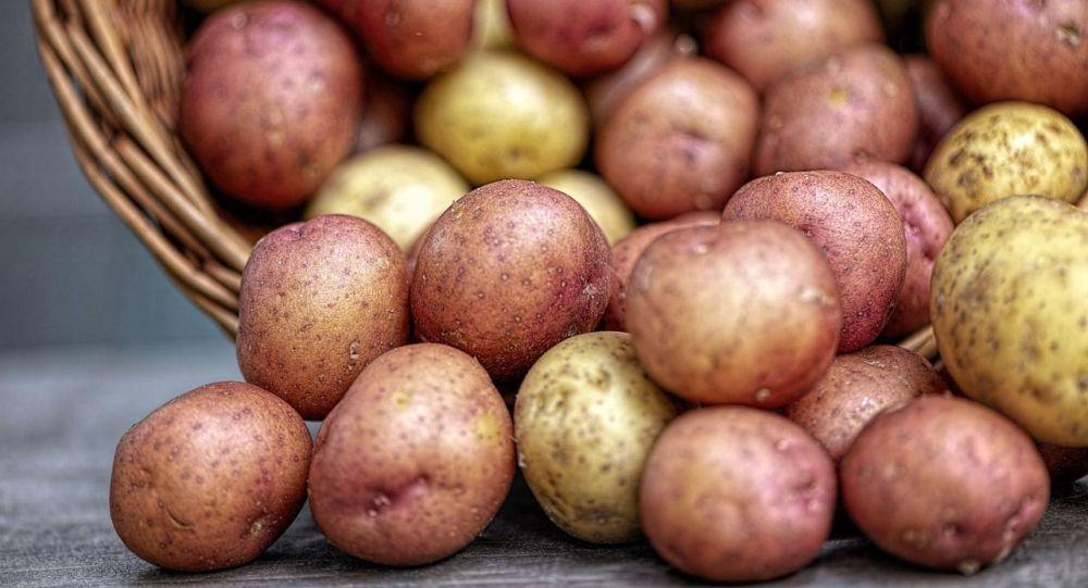 Картоп, көрнекі фото