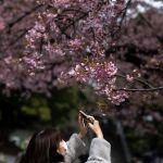 Токиодағы Уэно саябағында әйел адам гүлдеген сакураны суретке түсіріп тұр.