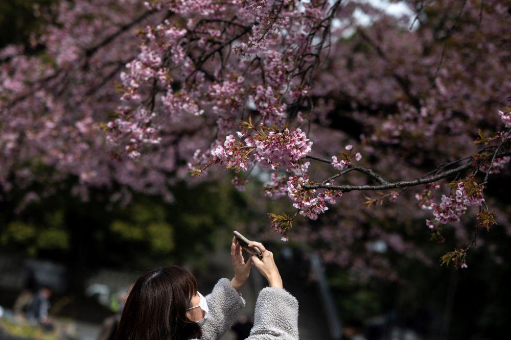 Женщина фотографирует цветущие сакуры в парке Уэно в Токио 12 марта 2021 года