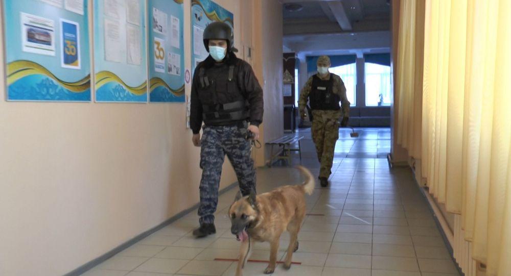 Полицейские с собакой обследуют школу на предмет взрывных устройств