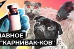 Первую в мире вакцину от COVID-19 для животных зарегистрировали в России