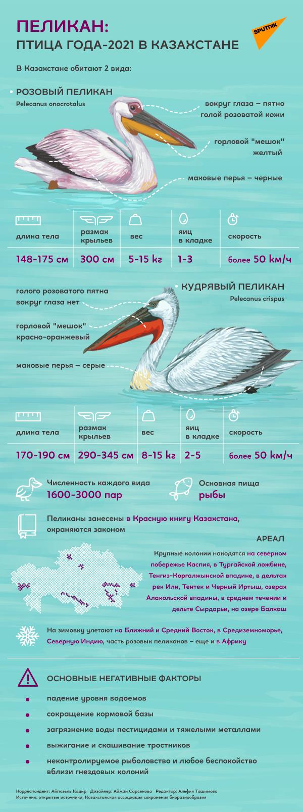Пеликан – птица 2021 года в Казахстане
