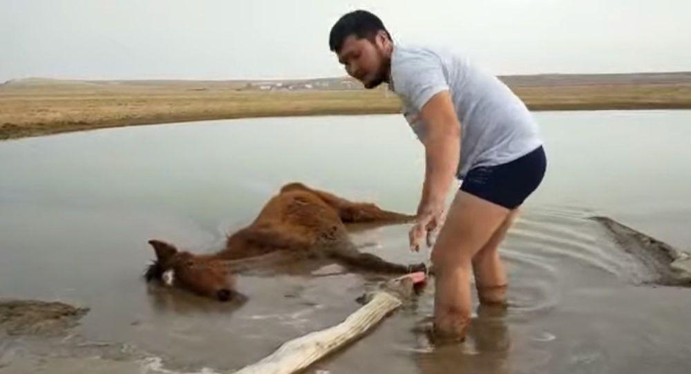 Спасение лошади в Мангистау