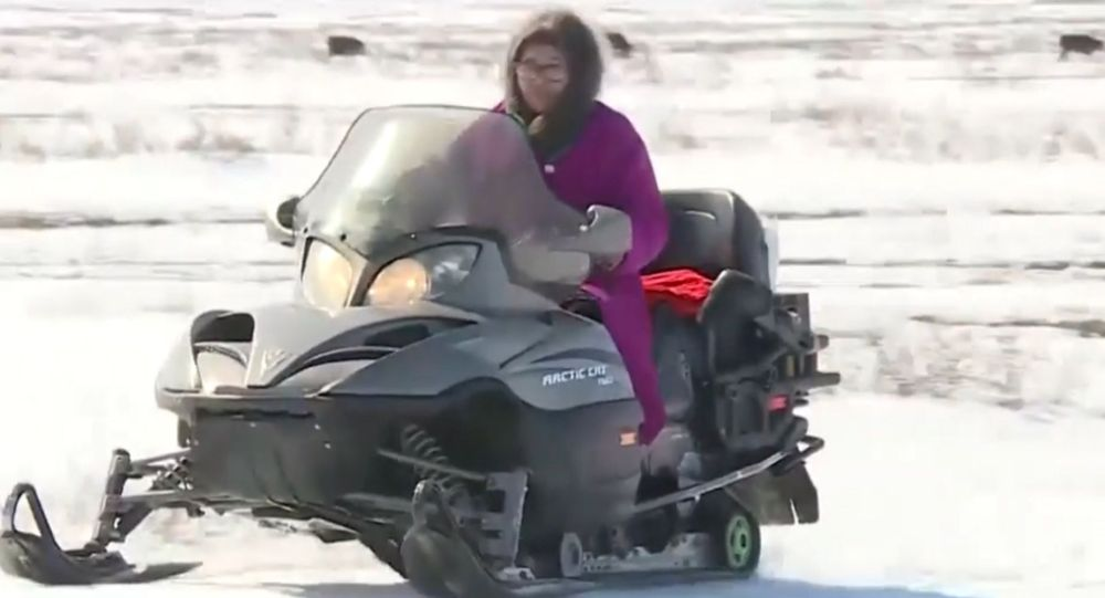 Мобильная бабушка пасет скот на снегоходе