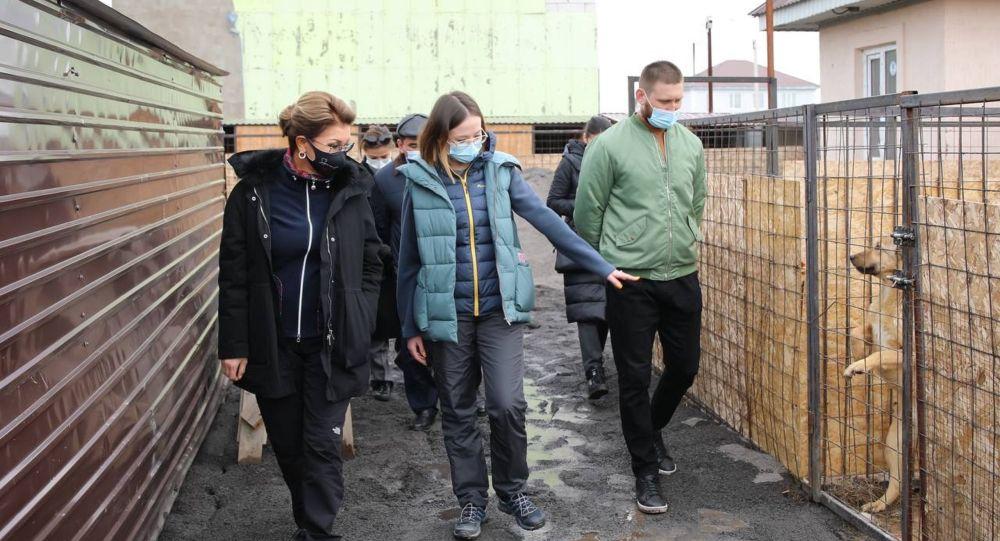 Дариға Назарбаев панасыз қалған ит-мысықтарды көріп қайтты